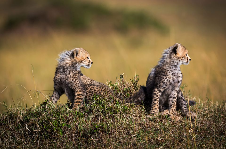A Beginner's Guide to a Kruger Safari
