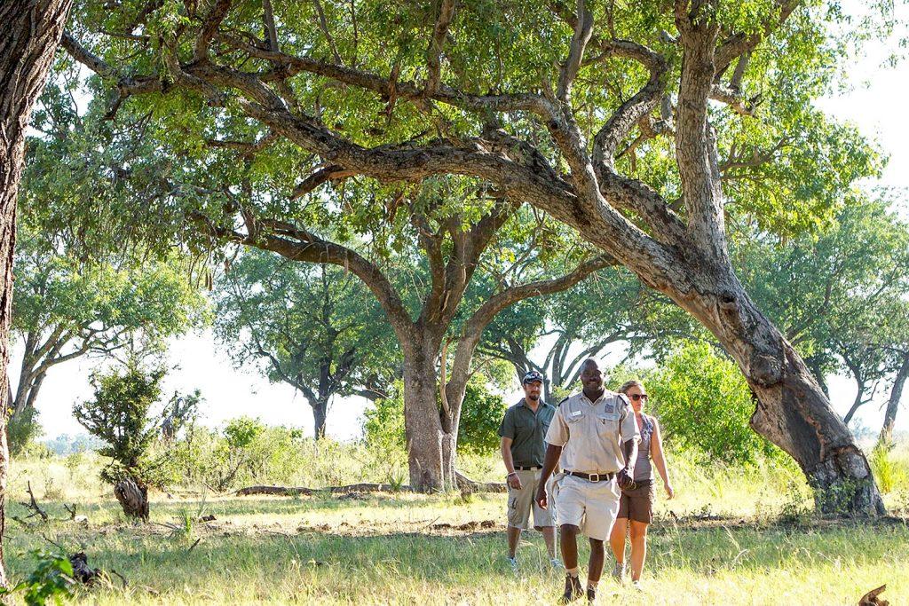 Walking Safari - Discovering Africa