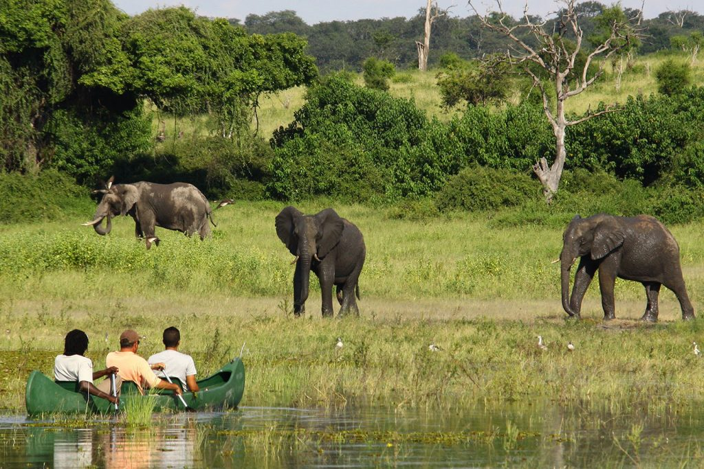 Elephants in Chobe - Discovering Africa