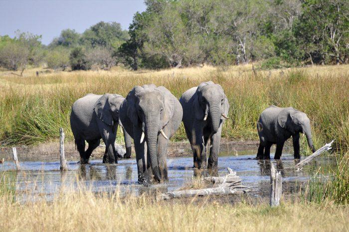 Cape Town, Vic Falls & Okavango Delta
