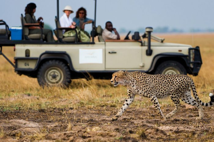 Victoria Falls, Botswana & Zambia Safari