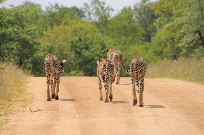 Full Day Open Vehicle Safari into Kruger