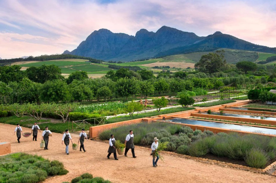 Cape Town's Favourite Wine Farms