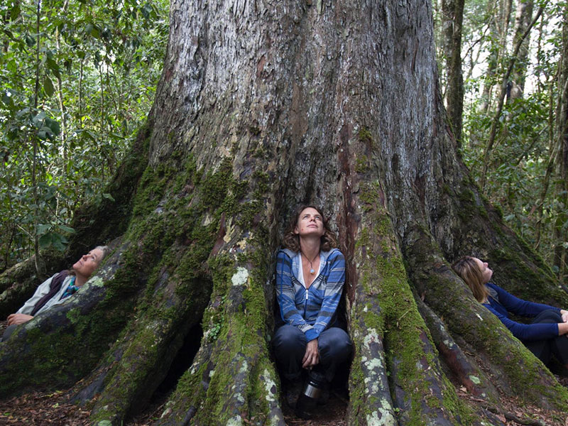 Garden Route - Tree - Discovering Africa