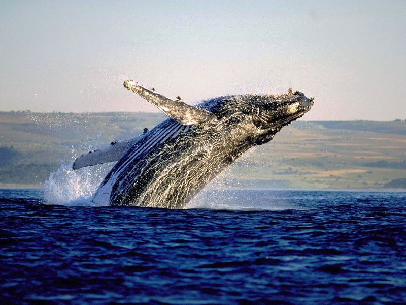Garden Route - Whales - Discovering Africa